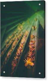 Tropical Ray  Acrylic Print