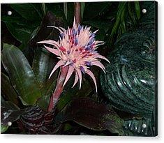 Tropical Thrill Acrylic Print by Sheila Silverstein