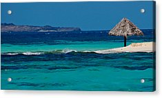 Acrylic Print featuring the photograph Tropical Umbrella by Don Schwartz