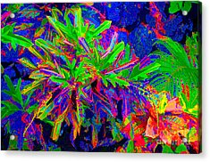 Acrylic Print featuring the photograph Tropicals Gone Wild by David Lawson