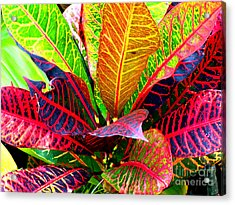 Tropicals Gone Wild Naturally Acrylic Print