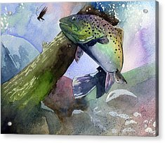 Trout And Fly Acrylic Print