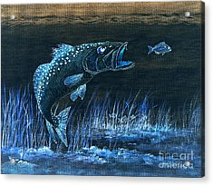 Trout Attack 1 In Blue Acrylic Print