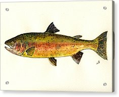 Trout Fish Acrylic Print by Juan  Bosco