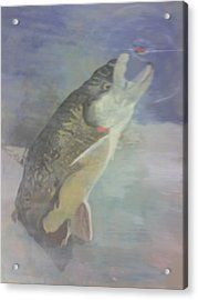 Trout To Fly Acrylic Print by Stephen Thomson