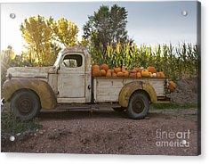 Pumpkin Time Acrylic Print by Juli Scalzi