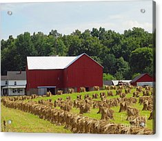 True Amish Farm Acrylic Print
