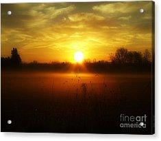 true Beauty in Light II Acrylic Print
