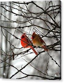 True Love Cardinal Acrylic Print