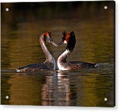 True Love Acrylic Print by Paul Scoullar