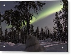 Truly Northern Acrylic Print by Valerie Pond