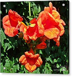 Trumpet Flower Orange Quartet Acrylic Print
