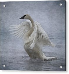 Acrylic Print featuring the photograph Trumpeter Swan - Misty Display by Patti Deters