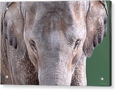 Acrylic Print featuring the photograph Truncated by Dyle   Warren