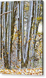 Trunks And Leaves Acrylic Print by Susan Leggett