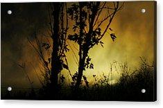 Trunks Of Trees Acrylic Print