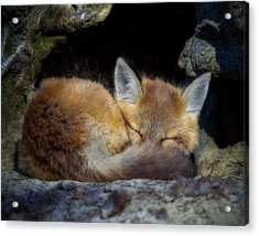 Fox Kit - Trust Acrylic Print