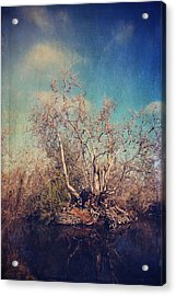 Trying To Survive Acrylic Print by Laurie Search