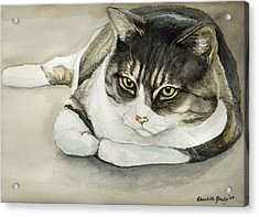 Tubby Acrylic Print by Charlotte Yealey