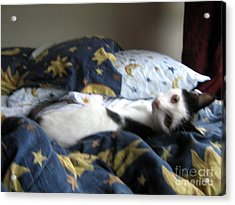 Acrylic Print featuring the photograph Tuck Me In by Wendy Coulson