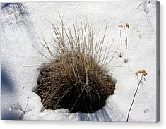 Tucked In The Snow Acrylic Print