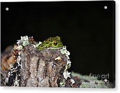 Tuckered Tree Frog Acrylic Print