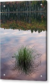 Tuft Of Grass And Morning Sky Acrylic Print