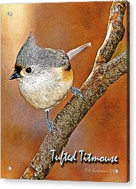 Acrylic Print featuring the photograph Tufted Titmouse by A Gurmankin