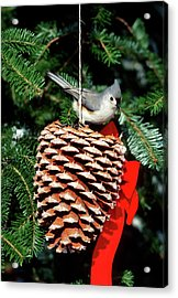Tufted Titmouse (baeolophus Bicolor Acrylic Print by Richard and Susan Day