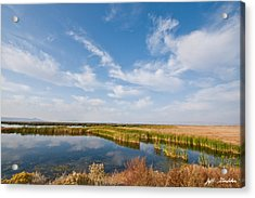 Acrylic Print featuring the photograph Tule Lake Marshland by Jeff Goulden