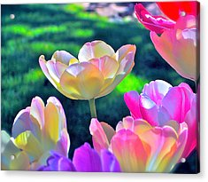 Tulip 21 Acrylic Print