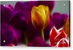 Tulip-6983 Acrylic Print by Gary Gingrich Galleries