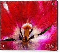 Tulip 7 Acrylic Print