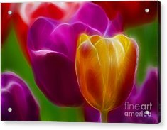 Tulip-7011-fractal Acrylic Print by Gary Gingrich Galleries