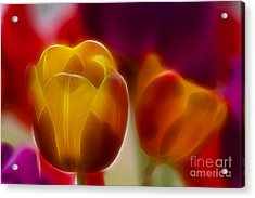 Tulip-7016-fractal Acrylic Print by Gary Gingrich Galleries