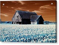 Tulip Barn Acrylic Print