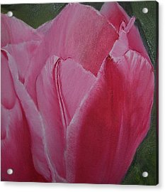 Tulip Blooming Acrylic Print by Claudia Goodell