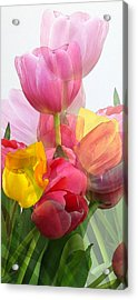 Vertical Tulips 2 Acrylic Print by Rene Sheret