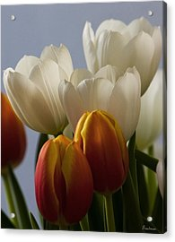 Tulip Bouquet Acrylic Print by Michael Friedman