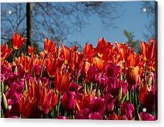 Tulip Chatter Acrylic Print