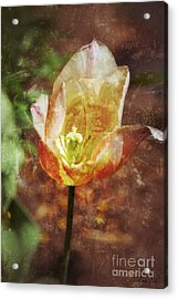 Acrylic Print featuring the photograph Tulip by Darla Wood