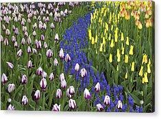 Tulip Design Acrylic Print