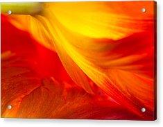 Tulip Flame Acrylic Print