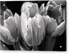 Tulip Flowers Black And White Acrylic Print by Jennie Marie Schell