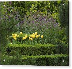 Tulip Garden Acrylic Print by Frank Tschakert
