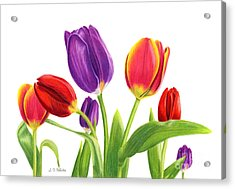 Tulip Garden On White Acrylic Print by Sarah Batalka