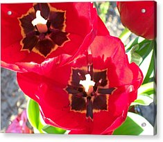 Acrylic Print featuring the photograph Tulip Harmony by Belinda Lee