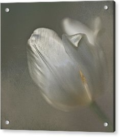 Acrylic Print featuring the photograph Tulip I by Kevin Bergen