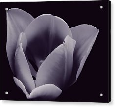 Tulip In Black And White Acrylic Print