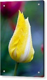 Tulip In Rain Acrylic Print